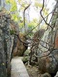 道路在石森林里 免版税库存照片