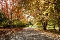 道路在秋天在莫斯科,爱达荷 库存照片