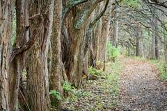 道路在秋天时间的森林 免版税库存照片