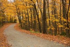 道路在秋天期间的一个森林里 库存照片