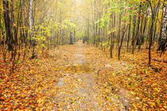 道路在秋天森林里 免版税库存图片