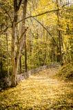 道路在秋天森林里 免版税图库摄影