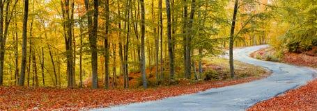 道路在秋天森林里 免版税库存照片