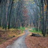 道路在秋天森林里 库存图片