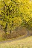 道路在秋天森林,垂直 免版税库存照片