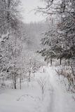 道路在积雪的森林里 免版税库存图片