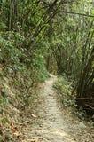 道路在竹森林里 库存图片