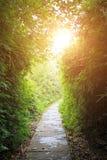 道路在竹森林里 免版税库存照片