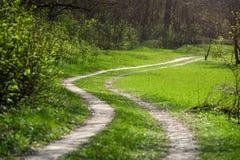 道路在绿化新鲜的草甸的森林里 免版税库存照片