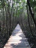 道路在美洲红树森林里 免版税库存图片