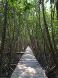 道路在美洲红树森林里 库存图片