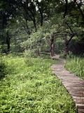 道路在草和森林 免版税库存图片
