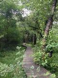 道路在草和森林 库存照片