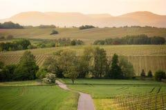 道路在葡萄园里在日落的Pfalz,德国 免版税库存照片