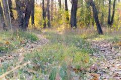 道路在被弄脏的秋天森林里 免版税库存照片