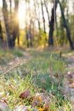 道路在被弄脏的秋天森林里 图库摄影