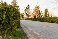 道路在被弄脏的背景的公园 库存照片