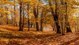 道路在金黄黄色树和蓝天秋天下 免版税库存照片