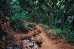道路在鬼的森林里 图库摄影