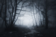 道路在黑暗和可怕森林里 免版税库存照片