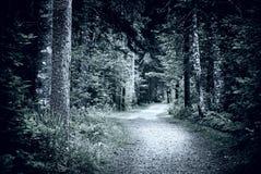 道路在黑暗的夜森林里 免版税库存照片