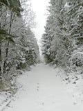 道路多雪的森林 库存图片