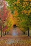 道路标示用在秋季的槭树 免版税库存图片