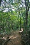 道路标示用高大的树木 免版税库存照片