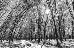 道路橡胶季节变动离开与树联盟带领入下来的土路在天际 免版税图库摄影