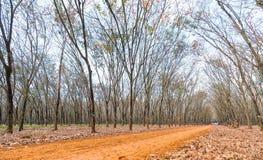 道路橡胶季节变动离开与树联盟带领入下来的土路在天际 库存照片