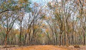 道路橡胶季节变动离开与树联盟带领入下来的土路在天际 库存图片