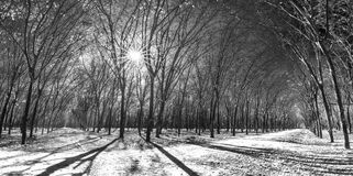 道路橡胶季节变动离开与树联盟带领入下来的土路在天际 免版税库存图片