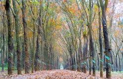道路橡胶季节变动离开与树联盟带领入下来的土路在天际 免版税库存照片