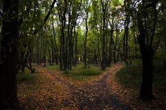 道路的分裂到两条道路里在森林在与黄色的秋天上色了在边的树 库存图片
