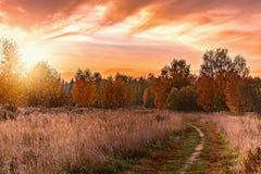 道路的秋天视图由草甸的 库存图片