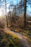 道路穿过一个光秃的森林在晚上阳光下 库存图片
