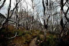 道路穿过一个干燥森林 免版税库存照片