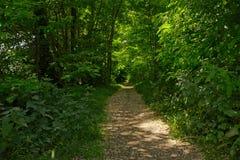 道路穿过一个豪华的绿色春天森林 图库摄影
