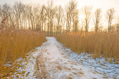 道路穿过一个冻结的领域在冬天 免版税库存照片