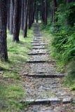 道路穿过不可思议的森林 图库摄影