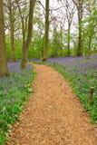 道路穿过会开蓝色钟形花的草木头 免版税图库摄影