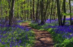 道路穿过会开蓝色钟形花的草森林 库存照片