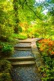 道路穿过全国树木园的一个五颜六色的庭院洗涤的 免版税图库摄影