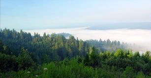 道路穿过全国森林、的红木&国家公园,加利福尼亚 库存照片