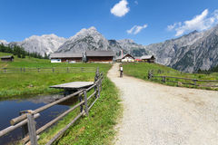 道路穿过农村山风景在夏天,在Walderalm附近,奥地利,新手 免版税库存图片