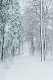 道路穿过冬天森林 图库摄影
