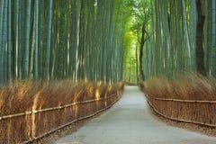 道路穿过在京都,日本附近的Arashiyama竹森林 免版税库存照片