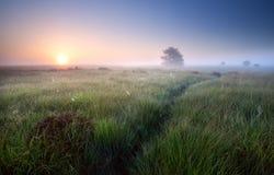 道路穿过在有薄雾的日出的草 库存图片