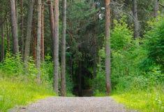 道路穿过在树背景之间的森林 图库摄影