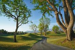 道路穿过在路线的树在加利福尼亚 免版税库存图片